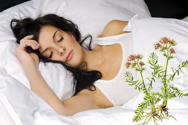 Nữ lang thần dược điều trị mất ngủ